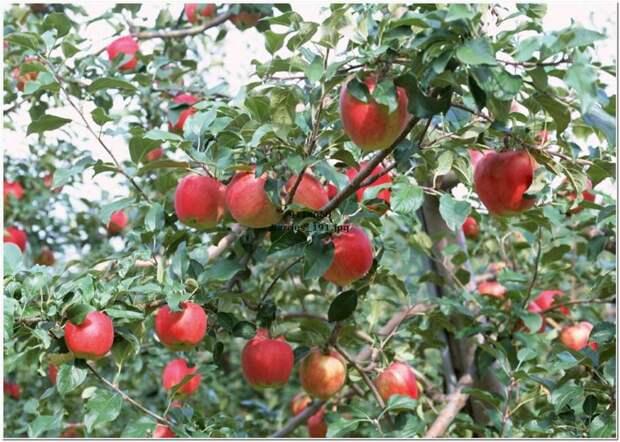 http://www.f-oboi.ru/products_pictures/Food/Yagodi_2/berries_191.jpg