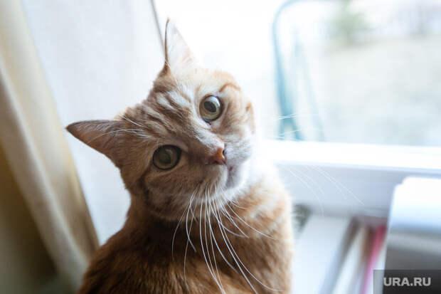 Тюменских кошек исобак проверят накоронавирус