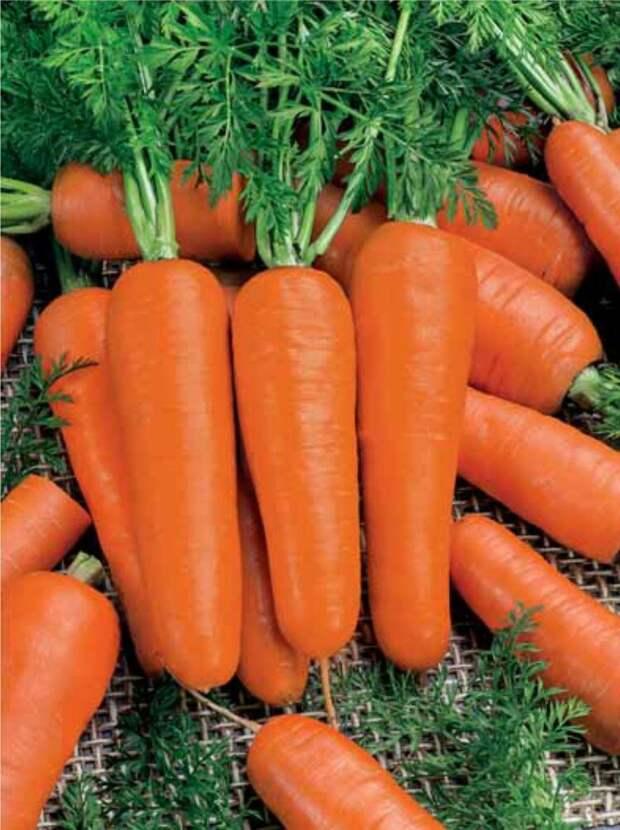 Правильное выращивание моркови.