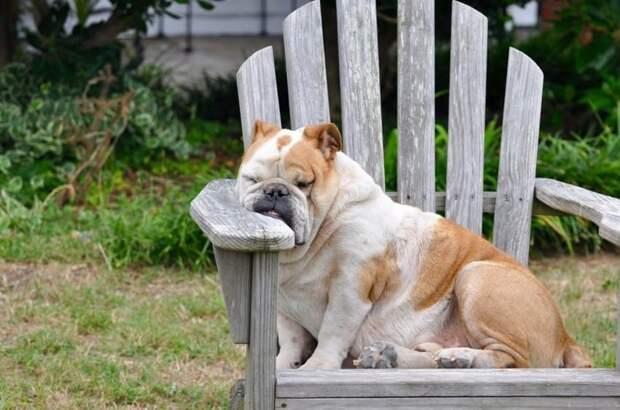 Когда ну очень устал.. животные, мило, питомцы, подборка, смешное, собаки, сон, фото