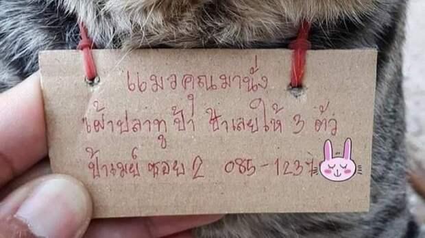 Сбежавший из дома таиландский кот задолжал хозяйке рыбной лавки
