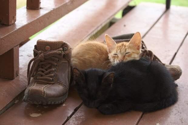 «На ботинках принёс»: хозяин дачи на ночь оставил обувь на веранде. А через пару часов обнаружил на обуви мирно спящих котят