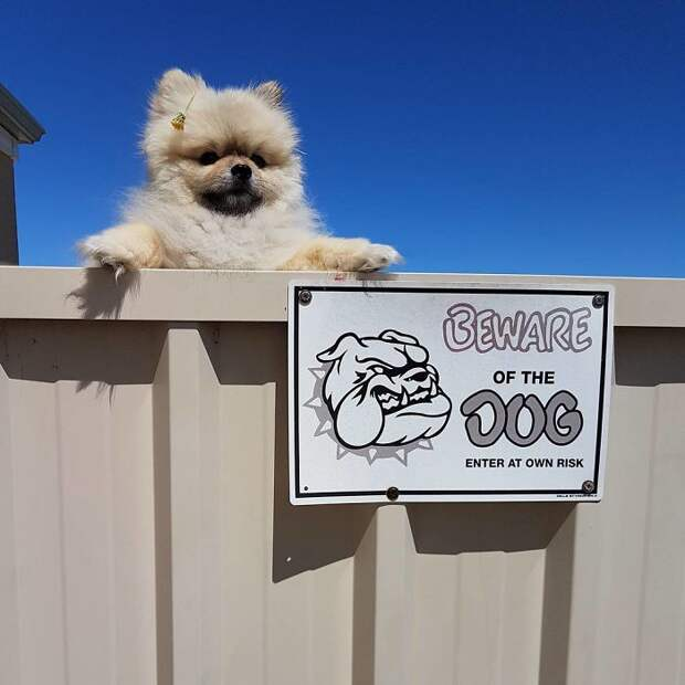 Ситуации, когда при виде таблички «Осторожно! Злая собака!» реально теряешь дар речи