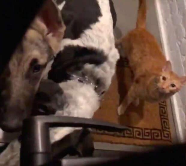 Парень услышал странный шум за дверью - на пороге его ждала целая банда видео, забавно, история, история спасения, кошки, неожиданно, собаки