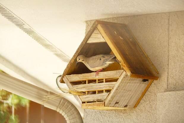 Гнездовье для горлиц