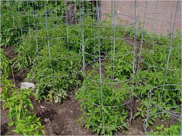 Шпалера для помидоров своими руками – 7 вариантов изготовления