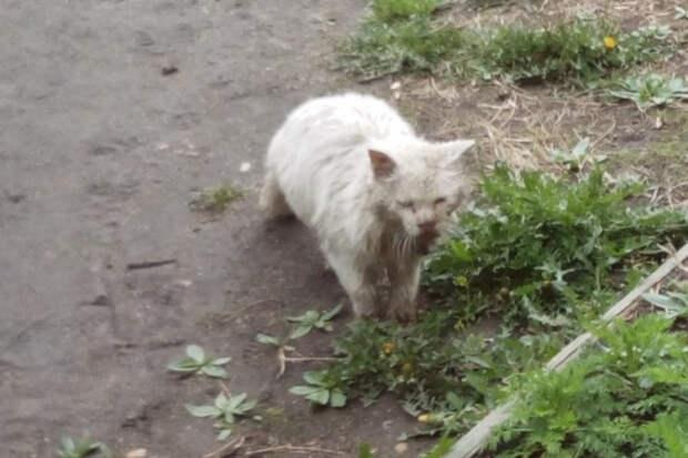 Котик 4 года преданно ждал владельцев, которые его бросили