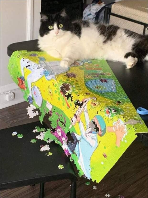 Кот и пазл