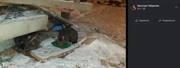 Бездомных кошек у метро «Динамо» могут замуровать