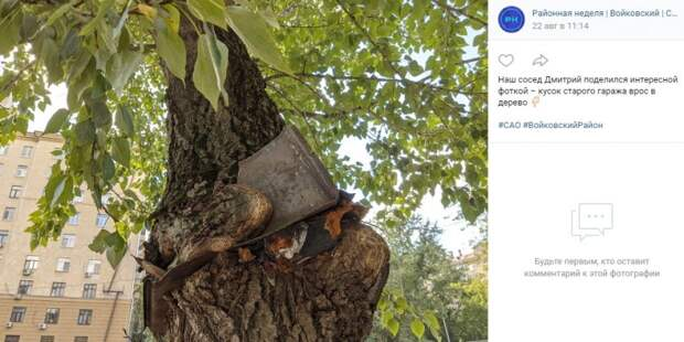 Фото дня: железо вросло в дерево