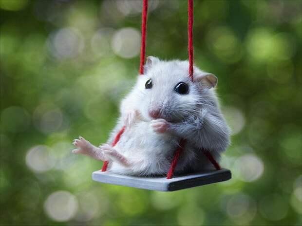 cute-hamsters-23__880