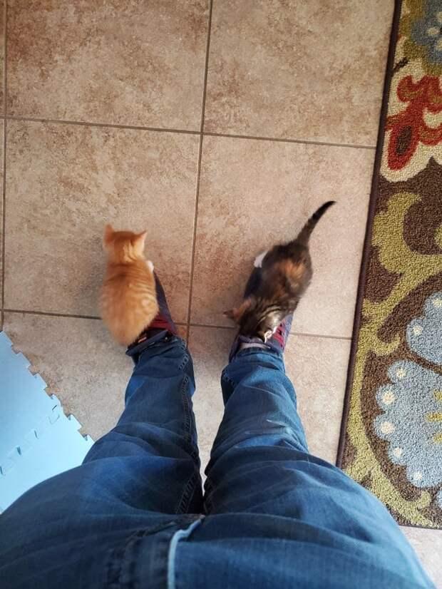 Кошачьи детки про которых ласково говорят «ладошечные»)