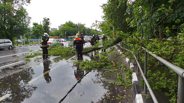 Шквалистый ветер повалил в Москве 20 деревьев и повредил 12 машин