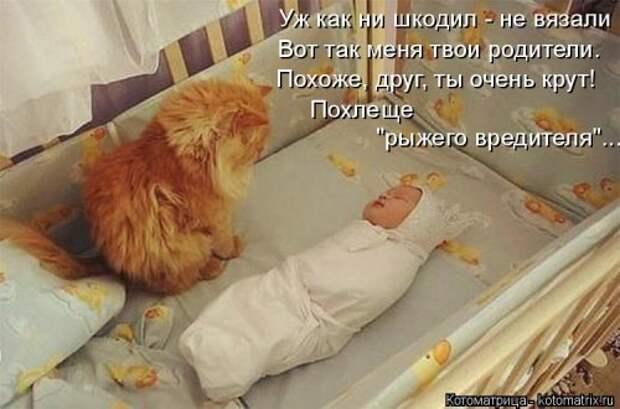Свежая котоматрица для всех