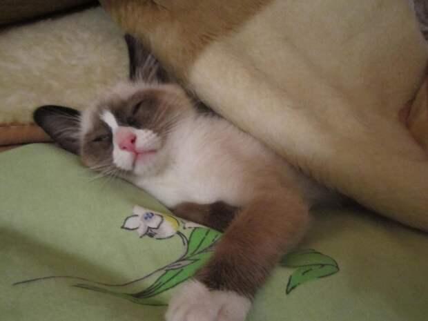 Забавные кошки,которые хотят спать