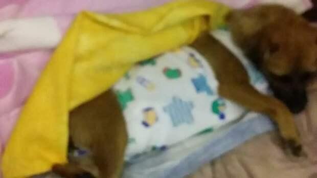 Чапа после операции