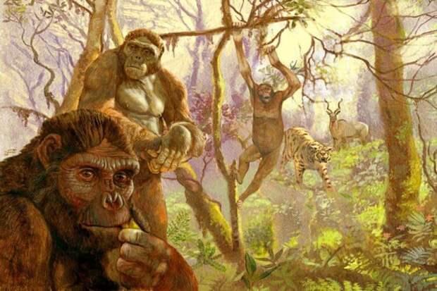 Как обезьяны научились ходить на двух ногах?