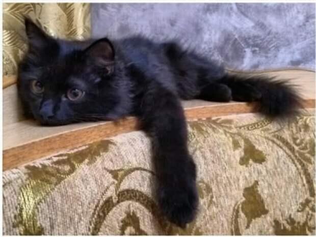 Если вы ищете очень красивую кошку, то она здесь! Торопитесь!