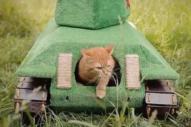 Новосибирец сделал 50-килограммовый танк для кота дом, животные, кот, своими руками, танк
