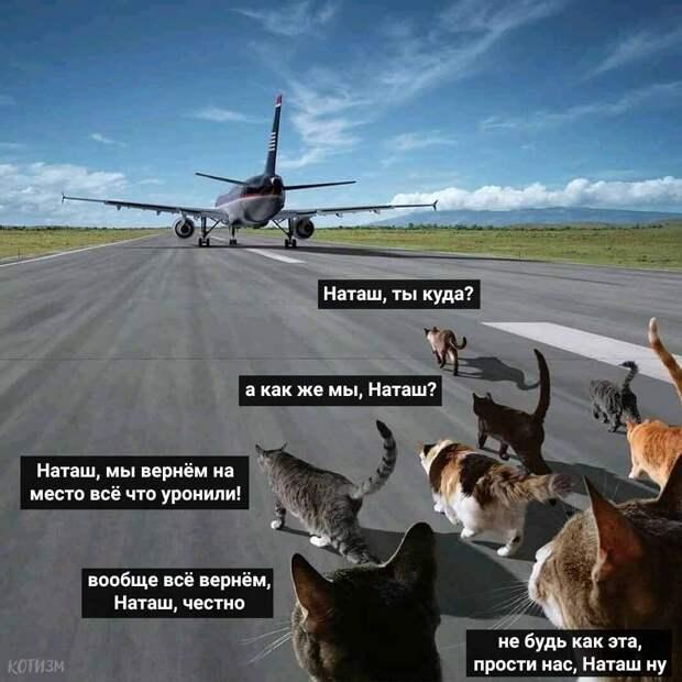«Наташ, вставай, мы всё уронили»: откуда взялись мемы про Наташу и котов, которые теперь буквально везде
