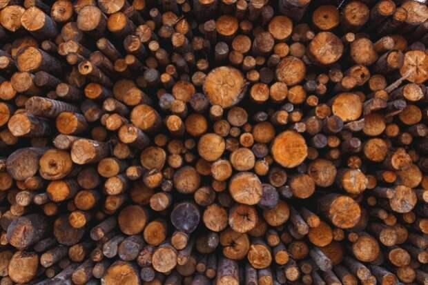 За месяц более 190 тысяч кубометров леса вывезли в Китай из Приморья