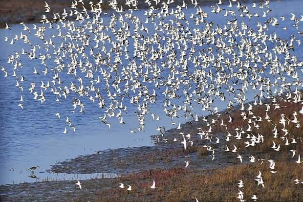 Ученые пересчитали всех птиц в небе и все деревья на Земле