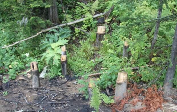 Терсинский лес  или если нельзя, но очень хочется