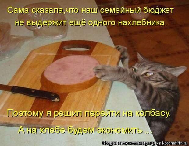 1451737533_kotomatricy-24