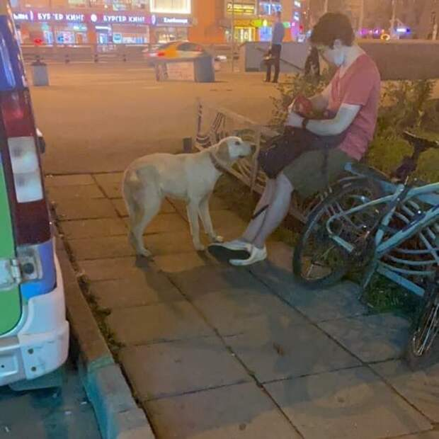 Хромой пёс ищет хозяев у метро «Октябрьское Поле»