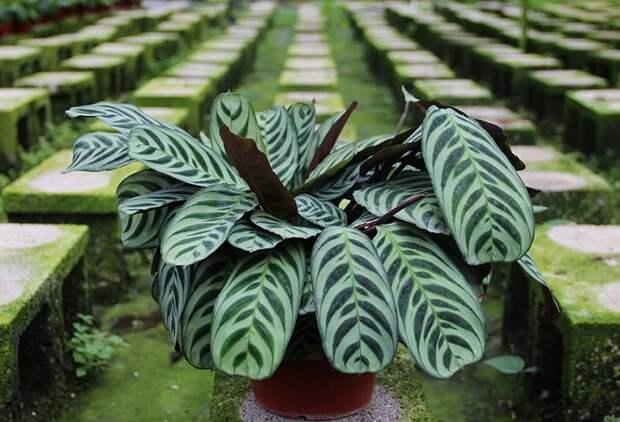 5 красивых домашних растений, не требующих особого ухода