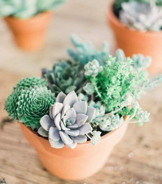 10 неприхотливых растений для тех, у кого нет времени