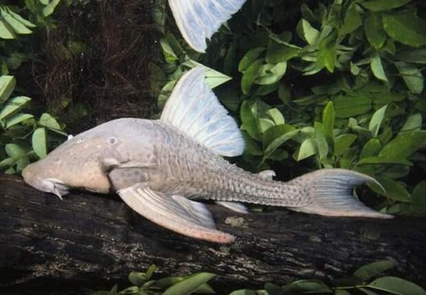 10 самых странных живых существ открытых в 2010 году