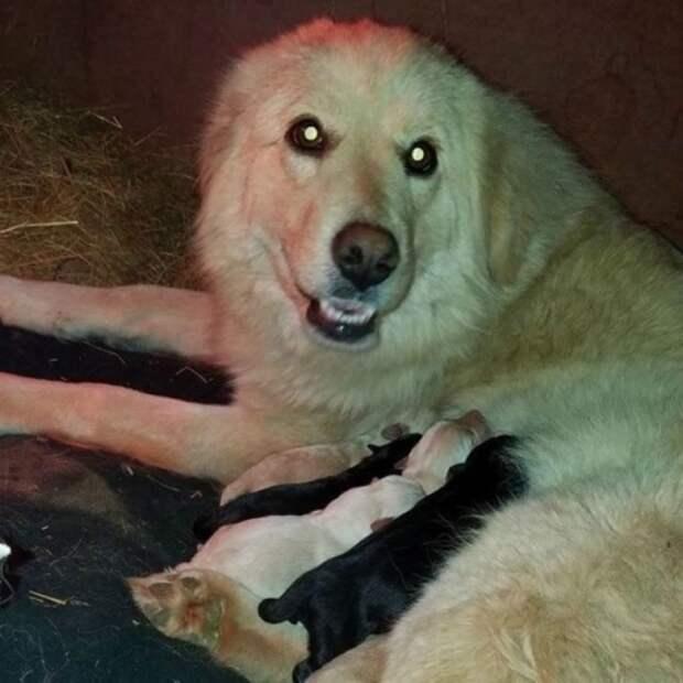 Собака, потерявшая в пожаре своих щенков, приняла осиротевших малышей