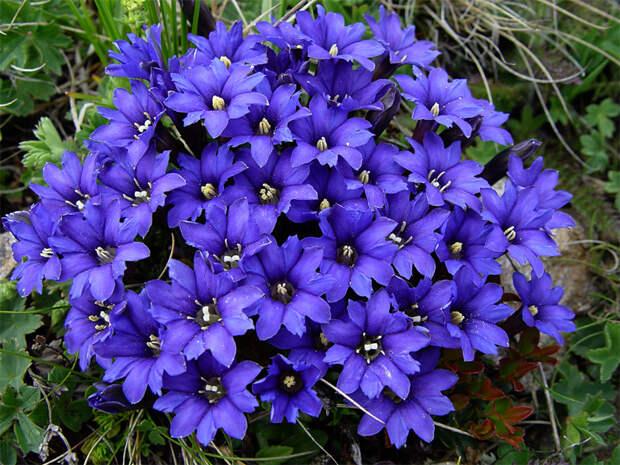 Готовимся к дачному сезону: цветы, которые стоит высадить в декабре и январе