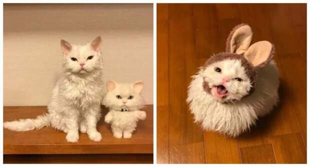 Почему кошка Чирико из Японии всегда выглядит недовольной