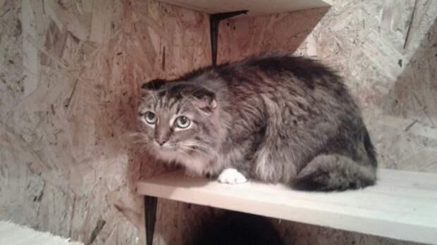 В Челябинске спасли два десятка кошек из квартиры умершей пенсионерки