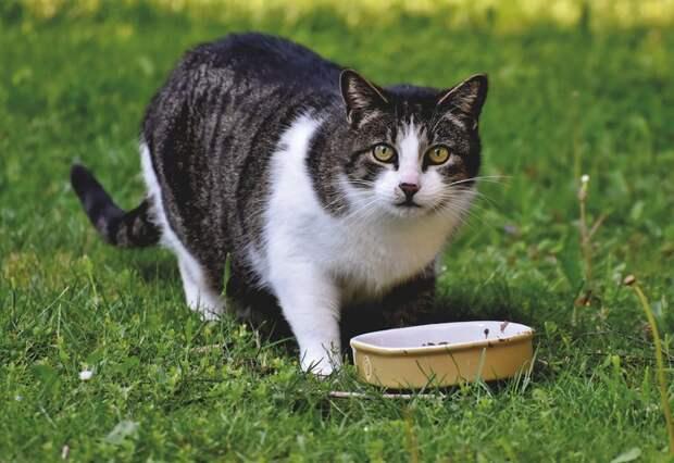 Наука объясняет 7 кошачьих странностей