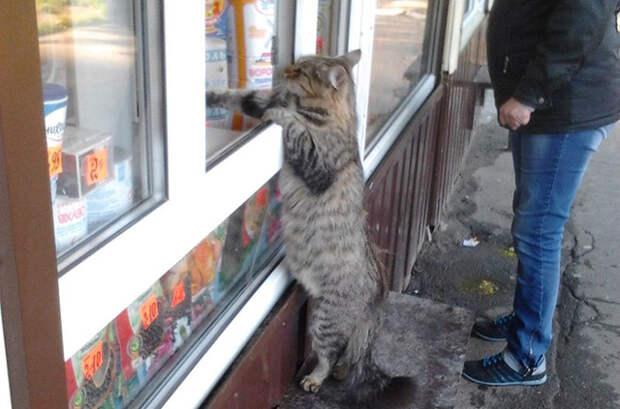 Кот активно включился в процесс покупки
