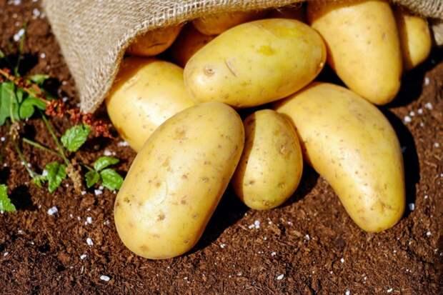 Как вырастить картофель в старых пластиковых ведрах