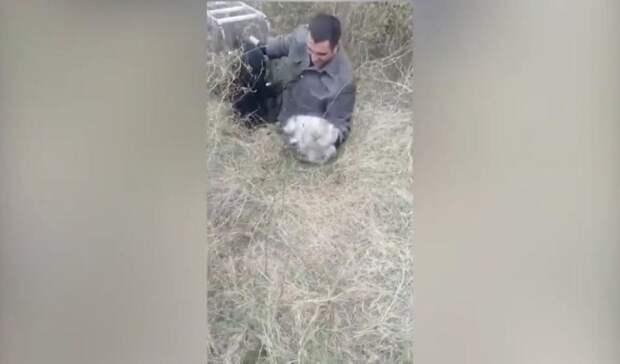 Доброта и отвага: в Приморье полицейские спасли жизнь двум диким животным