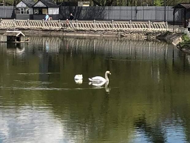 Фотокадр: Ромео и Джульетта в Лианозовском парке наслаждаются водной прогулкой