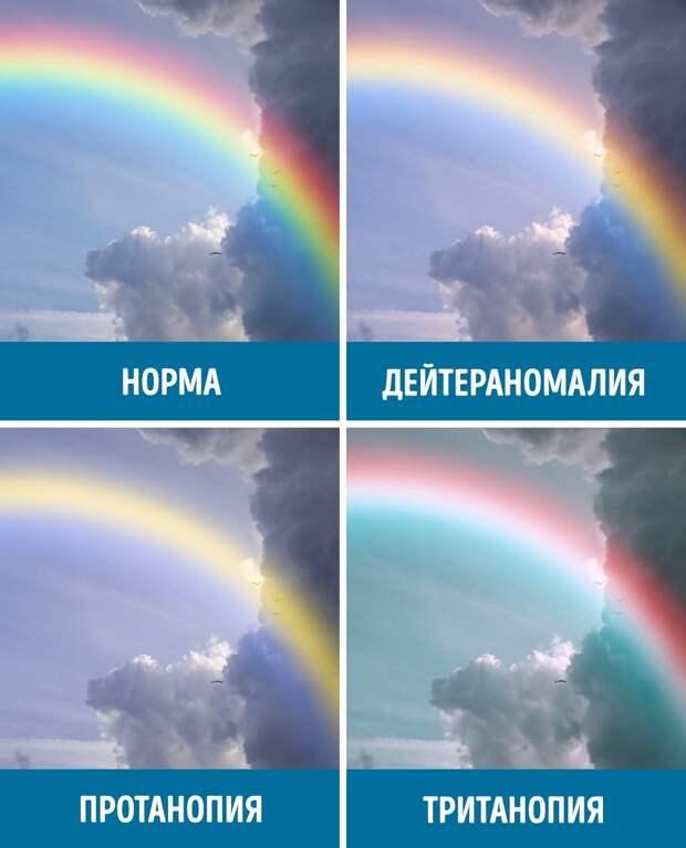 Как видят мир люди с разными формами дальтонизма