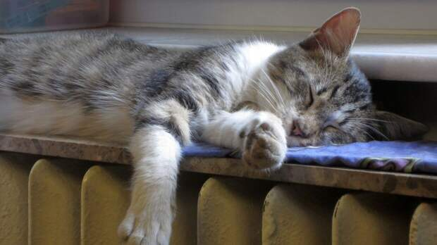 Промышленный альпинист спас застрявшего в окне кота в Пермском крае