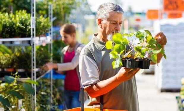 10 соблазнов, которые подстерегают дачников весной