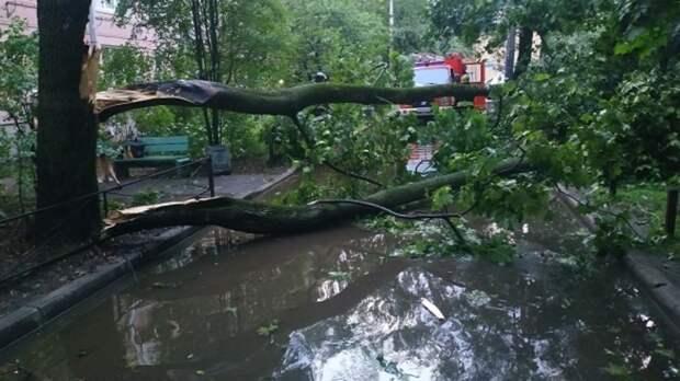 ВРостове-на-Дону из-за усиления ветра объявлено штормовое предупреждение на26мая