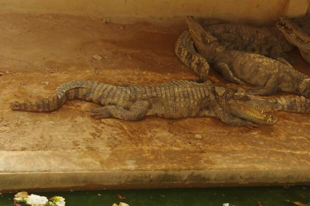 Вот такое оно – приусадебное хозяйство в Камбодже!