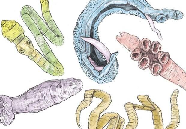 Симптомы, по которым можно судить о наличии паразитов в кишечнике