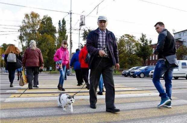 Старику за кота предложили полмиллиона рублей, но он отказался