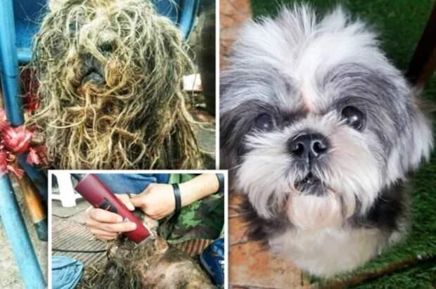 Брошенная собака со слипшейся шерстью полностью преобразилась и нашла дом