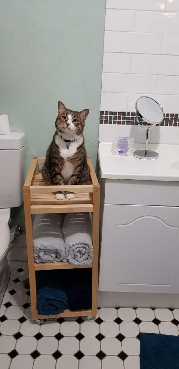 Эти 10 людей хотели расслабиться в ванной, но у их котов были другие планы